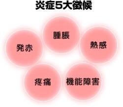 炎症の5大徴候